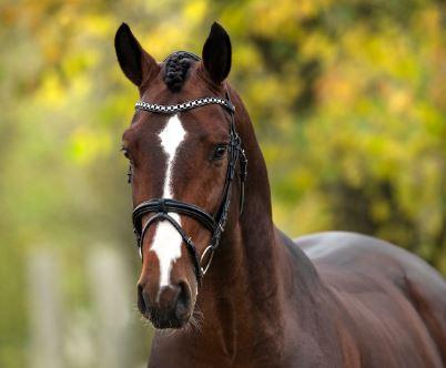 Triton Hästak 1330 e. Cabachon - Winningmood
