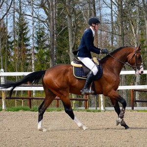 Casanova Hästak