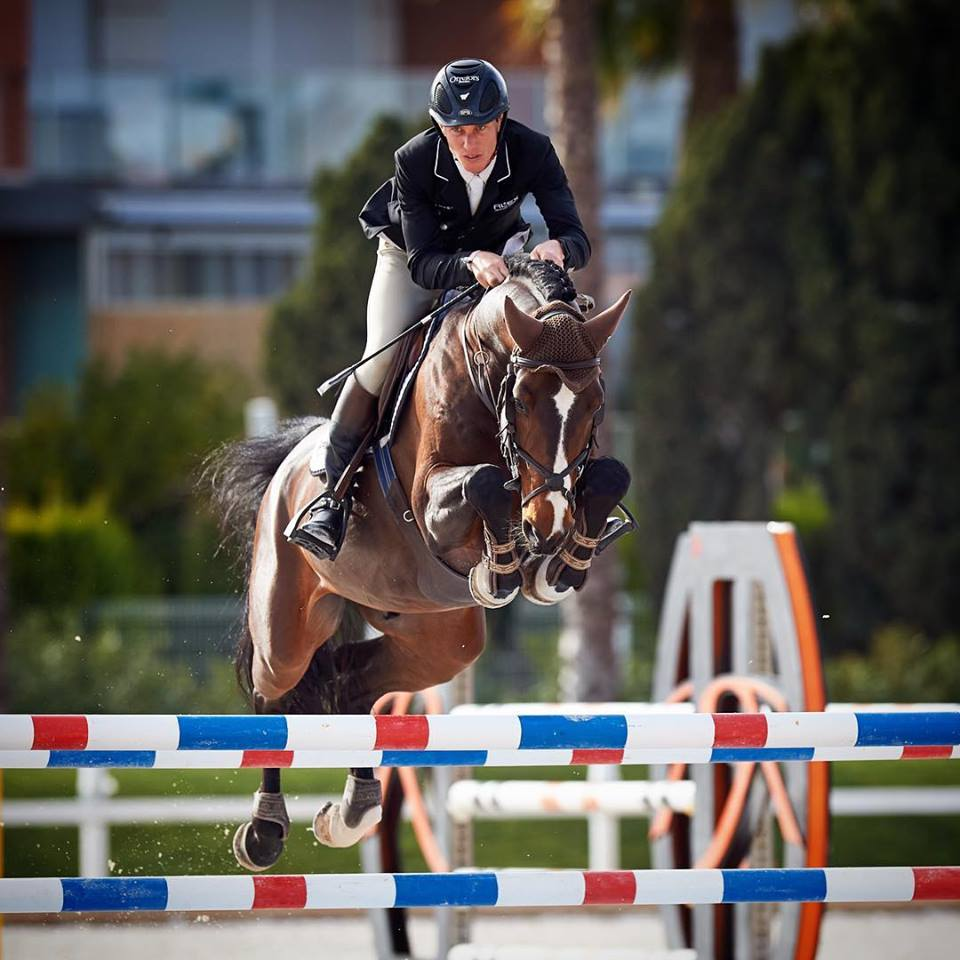 Triton Hästak e. Cabachon - Winningmood Stallion